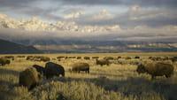 Au coeur des parcs nationaux d'Amérique : Yellowstone et Yosemite