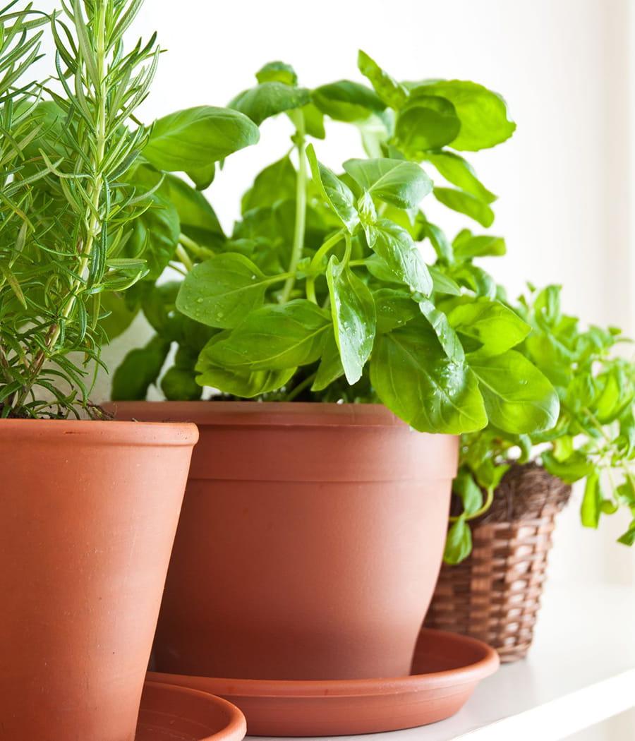 Vitez les plantes vertes d 39 int rieur for Recherche sur les plantes vertes