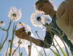 La vie sauvage du jardin : Une journée d'été