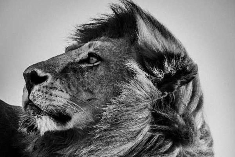 20 portraits fascinants de la faune africaine. Black Bedroom Furniture Sets. Home Design Ideas