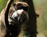 Zoo Nursery France : Au bal de la Boissière