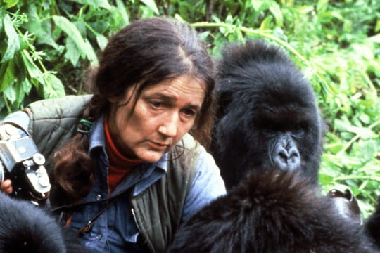 Dian Fossey : biographie, sa passion pour les gorilles, son assassinat