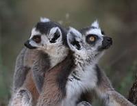 Zoo Nursery France : Apprentissage de la vie au Parc d'Auvergne