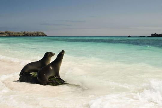Îles Galápagos: une liste d'animaux exceptionnelle mise en valeur par Google