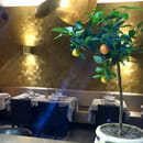 Restaurant : Le Cèdre  - Restaurant vegetarian a Nice. Le Cèdre -