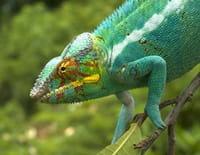 Madagascar : L'île aux merveilles