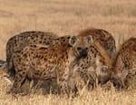 Champs de bataille pour prédateurs
