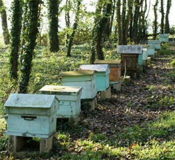 les abeilles sont déjà diminuées physiquement puis décimées par un facteur