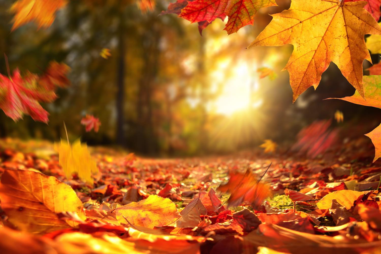 Equinoxe d'automne 2021: pourquoi la date est fixée le 22septembre?