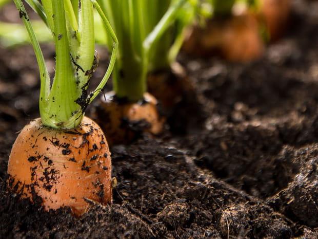 Adieu pesticides ! Des alternatives bios pour le jardin