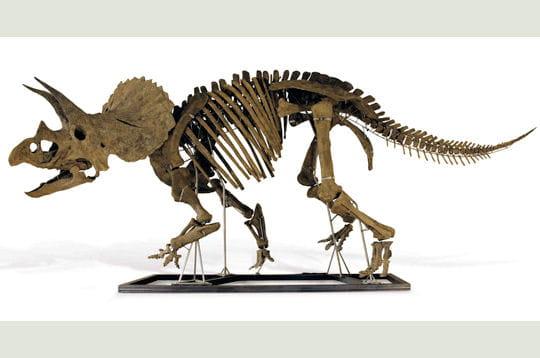 Des dinosaures aux enchères!
