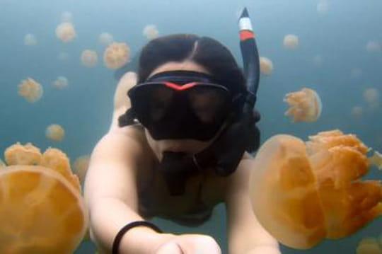 Elle plonge parmi des centaines de méduses