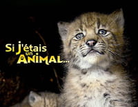 Si j'étais un animal : Si j'étais un orang outan