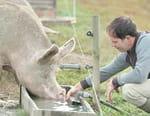 Faut-il arrêter de manger les animaux ?