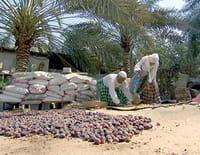 Mystérieuse Arabie : Arabie saoudite : l'Ouest