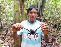 360°-GEO : Venezuela, chasseurs de mygales