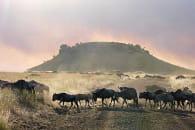 masai mara jenny provent