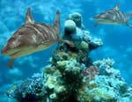 Requins des abysses 3