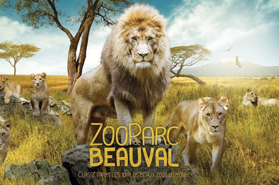 Zoo De Beauval Une Vue Imprenable Sur Le Parc Depuis Des Télécabines