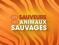 Les sauveurs des animaux sauvages