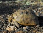 La tortue après l'éden