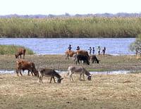 Horizons : Botswana, le joyau africain