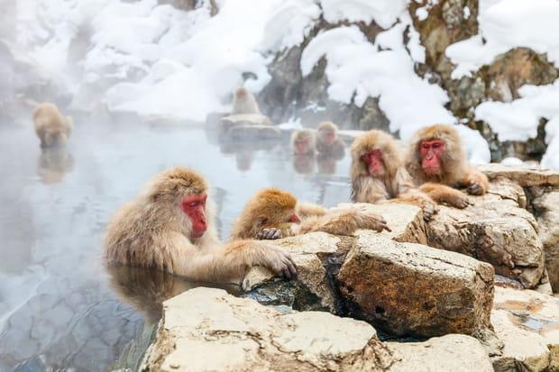 Jigokudani au Japon