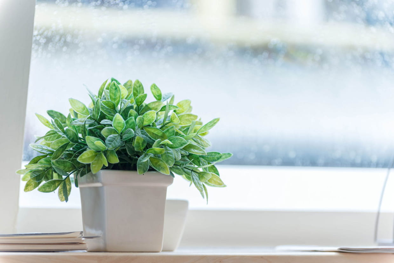 Comment bien choisir sa plante verte - Bien choisir sa television ...