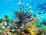 La vie sur le récif
