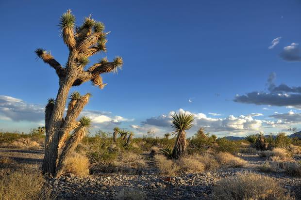 Désert de Mojave, Etats-Unis