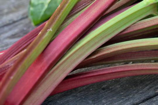 Rhubarbe: plantation, entretien et arrosage