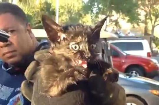 Ils sauvent un chaton coincé dans le moteur d'une voiture