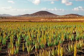 Les merveilles de l'île de Fuerteventura