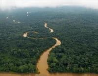 Amazone, dans les eaux troubles du fleuve