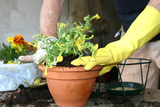 Rempoter une plante: nos astuces pour un rempotage réussi