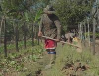 Nous, gens de la terre : Guyane, de la terre jusqu'au ciel