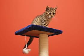 Arbre à chat: comment choisir le meilleur, nos suggestions de modèles