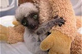 Des bébés animaux nés dans les zoos du monde