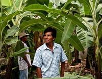 Les chemins de l'équitable : Les bananes du Pérou