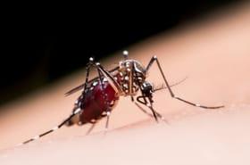 Les meilleurs remèdes et astuces pour dire adieu aux moustiques