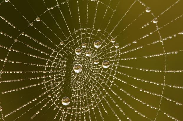 L'image de la semaine du 10 janvier 2012