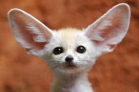 Les plus beaux bébés animaux du monde