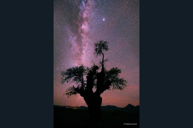 Un arbre au firmament