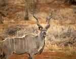 Namibie sauvage