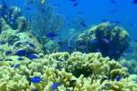 Les courants océaniques: gros pompeurs de CO2dans l'Atlantique Nord
