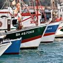 La Grillerie de Sardines  - restaurant avec vue sur le port de pêche -