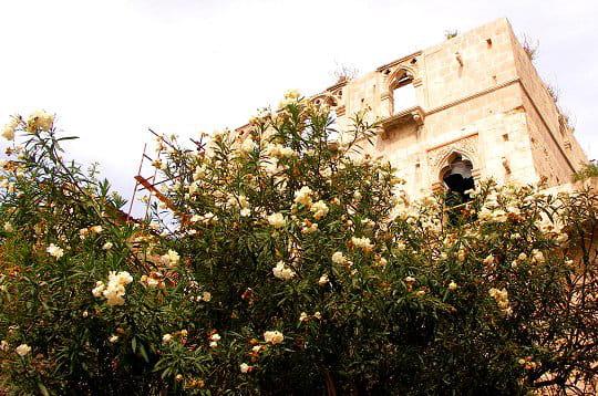Ruines fleuries