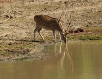 Sri Lanka, île des extrêmes : Les chasseurs du lac