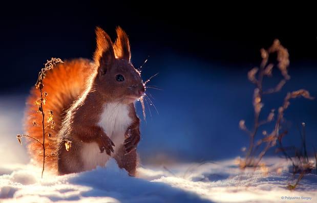 Écureuil dans ses pensées