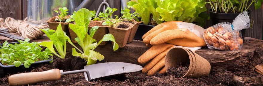 Jardinage plantes potager conseils et fiches pratiques - Plantes qui ne craignent pas le gel ...